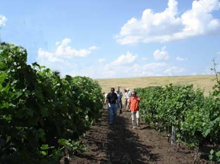 1295022245_plantacyya-vinograda-2