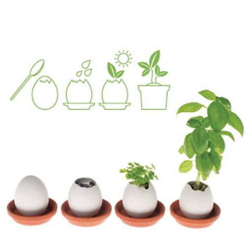 Бизнес идеи - яйцо «Eggling» или растущие из яиц цветы