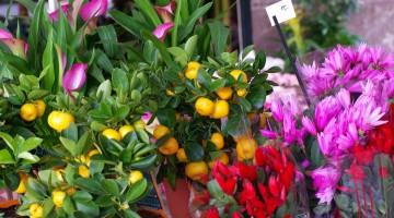 Бизнес план цветочного магазина. Советы, рекомендации, первые шаги