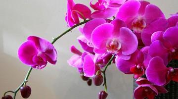 Питомник орхидей – бизнес для женщин