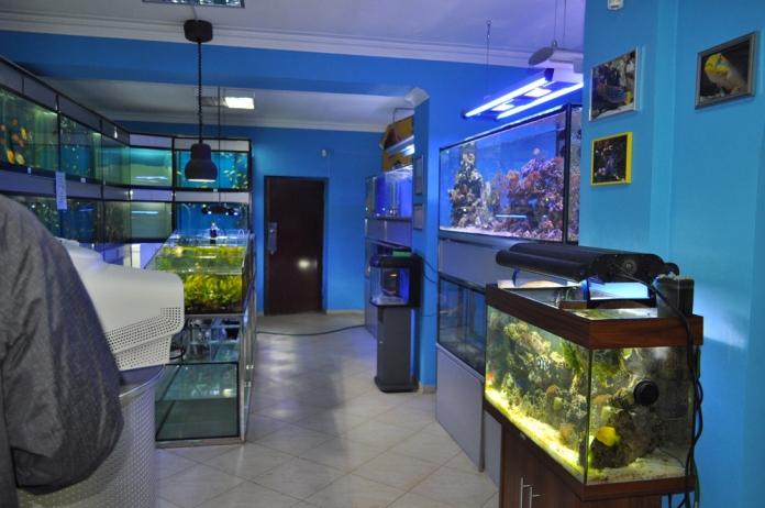 Примером узкоспециализированного зоомагазина является магазин аквариумистики