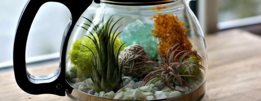 Бизнес идея — Выращивание карликовых растений в бутылке