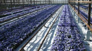 Организация бизнеса по выращиванию рассады