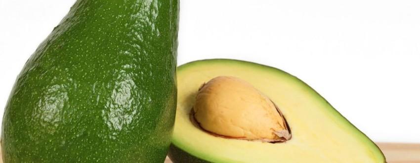 Бизнес идея для садовода — выращивание авокадо