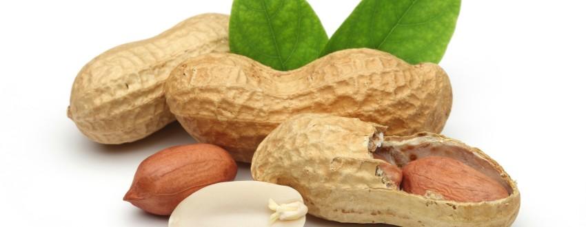 Бизнес идеи — Выращивание и продажа арахиса