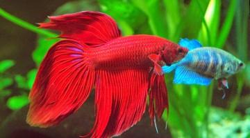 Новинка для любителей аквариумных рыбок