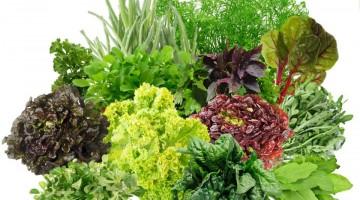Выращивание зелени на продажу круглый год