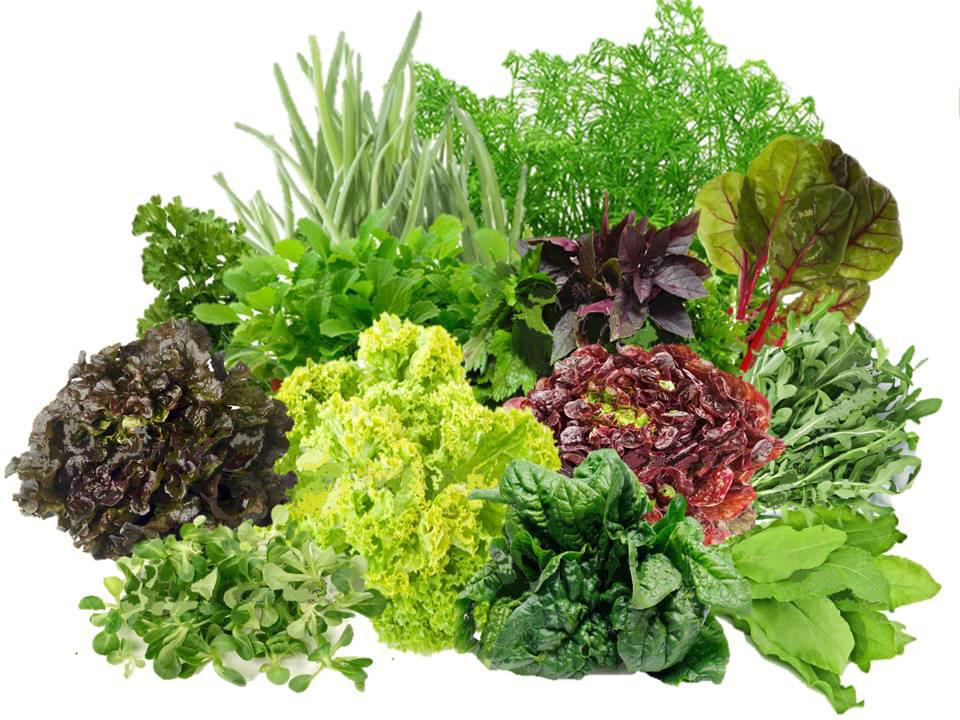 Укроп салат и петрушка