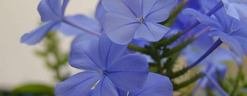 Идея бизнеса – уход за цветами