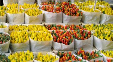Как заработать на выращивании цветов в теплице — бизнес-план