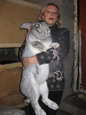 Меховая порода кроликов серый великан